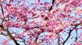 Japanische Feiertage im März ~ 03月の日本の祝日