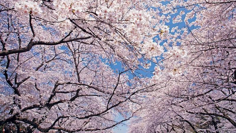 Japanische Feiertage im April ~ 04月の日本の祝日